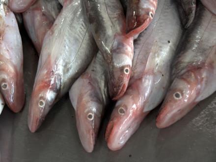 fishing-on-namsong